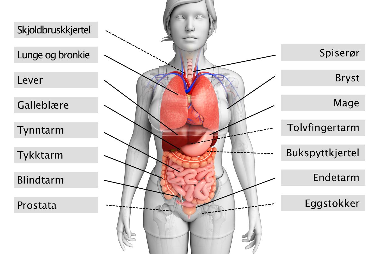kramper i nedre del av magen skamlepper bilder